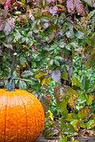 pumpkin and vine in the rain