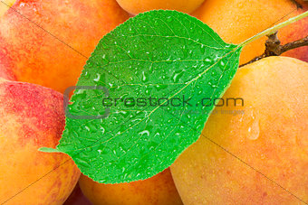 Close up apricots.