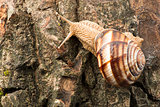 Snail on tree bark