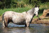 Nice mare bathing in the river