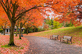 Walking and Biking Park Trails in Fall