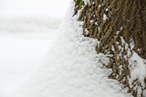 close up photo of tree trunk in snow