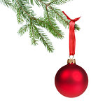 green fir branch with red christmas ball