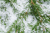 composition from fir twigs with snowflakes