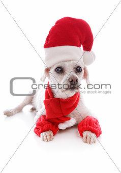 Cosy dog wearing a santa hat