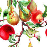Watercolor Illustration of pears and apple