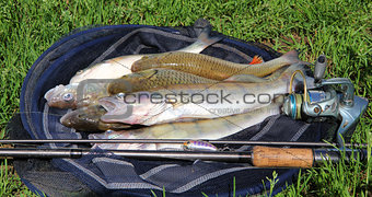 fishing catch on the grass and fishing gear