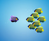 big angelfish leading group of angelfish