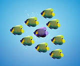 Purple angelfish between group of green angelfish