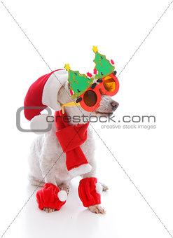 Happy dog at Christmas wearing comical glasses santa hat and cos