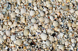 shells closeup as background