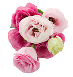 posy of  eustoma flowers from above