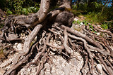 Roots of the Two Trees