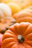 Pumpkins background