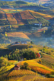 Rural houses and autumnal vineyards in Piedmont, Italy.