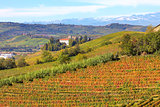 Autumnal view on vineyards in Piedmont, Italy.