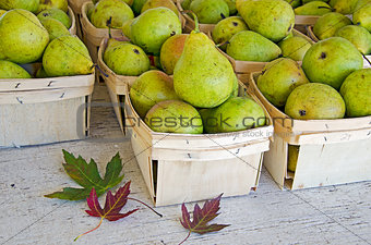 autumn pears in boxes