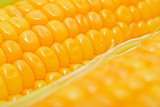 Sweet yellow corn cobs macro