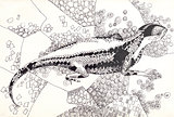lizard pen drawing