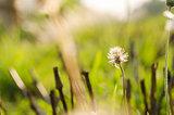 Flower plant grass