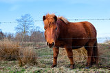 cute brown pony on pasture