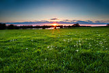 sunset over meadow with spring wildflowers