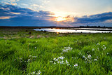 sunset over flowering  green meadow