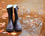 Autumn Fall concept wellington boots leaves and rain
