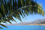 green palm against the blue sky and sea