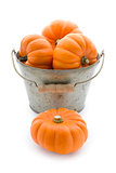 Bucketful of pumpkins