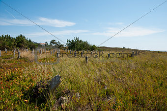 Abandoned cod fish dryers field