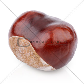 Single chestnut on white