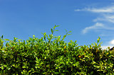 Green fence with blue sky with the nature background