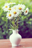 daisy flower in the vase with shallow focus