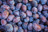 ripe purple and blue Plums (Blackthorns)