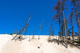 Dead-trees on dunes in Leba, Poland.