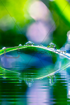 Green grass with dewdrops over water in sunshine