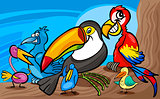 exotic birds group cartoon illustration