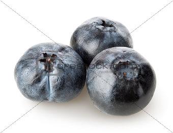 Three sweet blueberries