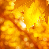 Abstract autumnal background