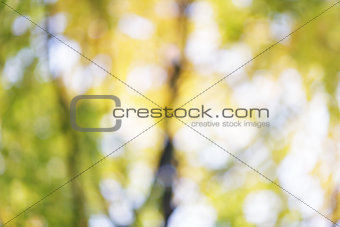 autumn out of focus background