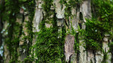 closeup photo of tree trunk with moss