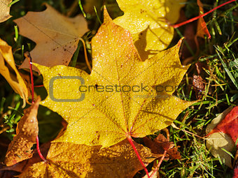 autumn leaves on the ground close up