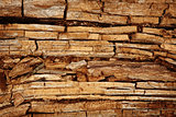 Rotten wood background