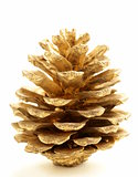 golden Christmas fir-cone  on a white background