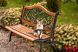 Cat on a garden bench