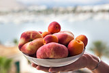 Fresh summer apricots and peaches in a bowl on the hand