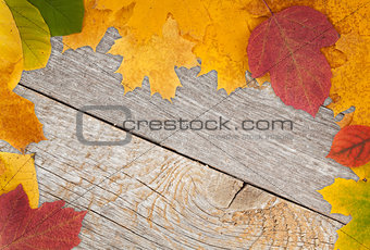 Autumn leaves on wood
