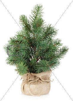 Fake mini Christmas tree