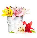 Colorful lily flowers in bucket